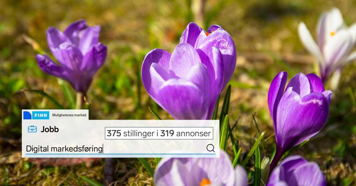 finn.no: 375 ledige stillinger i 319 jobbannonser